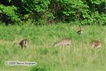Deer pictures, the herd Picture