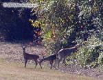Deer Family Picnic Photo Picture