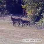 Deer Family Picture Picture