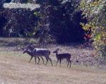Deer Family Lunchtime Picture Picture