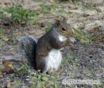 Squirrel Picture Picture