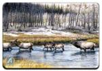 View details for this Elk Animal Magnet
