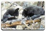 View details for this Black Bear Animal Magnet