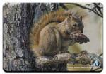 View details for this Squirrel Animal Magnet