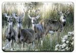 View details for this White-tailed Deer Animal Magnet