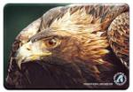 View details for this Golden Eagle Animal Magnet