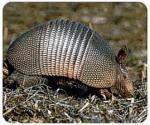 View details for this Armadillo Mousepad