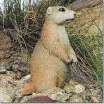 View details for this Prairie Dog Animal Figurine