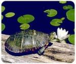 View details for this Turtle Mousepad